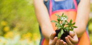 Leve seu filho para plantar uma árvore